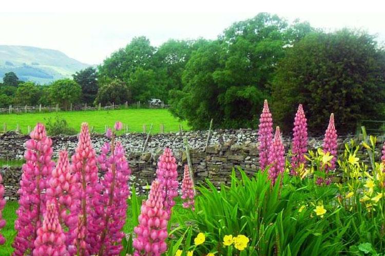 Sunnyridge - Image 5 - UK Tourism Online